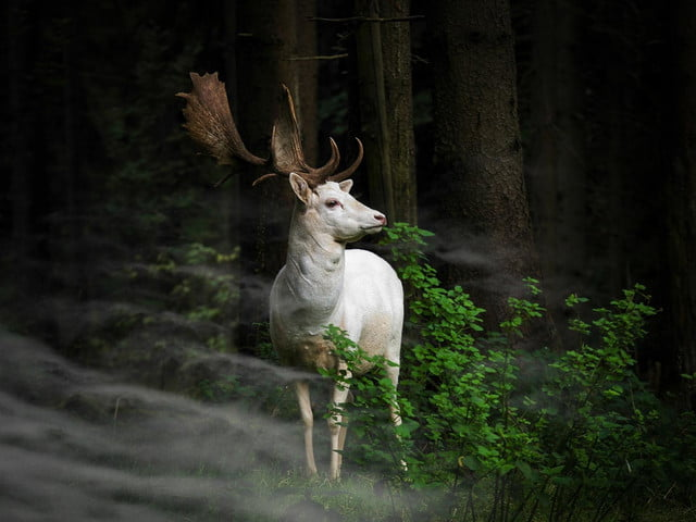 last call for sonys world photography awards 130621855614075825  c georg may germany entry nature and wildlife category open