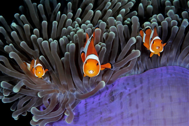 underwater photographer of the year 2017 401qinglin