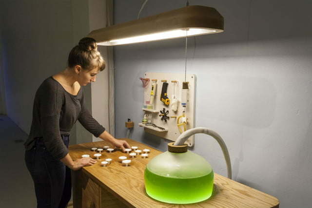 microalgae lamps can light your home and are edible algae lamp 03