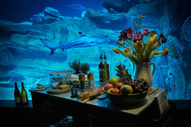 sleep underwater paris aquarium sharks airbnb de shark 004