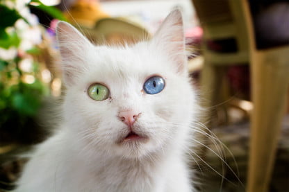 What Can a Cat DNA Test Tell You About Your Pet? | Digital