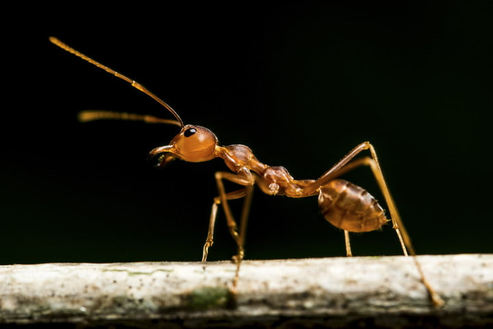 Will GPS ever become obsolete? Meet the ant-inspired tech that could replace it