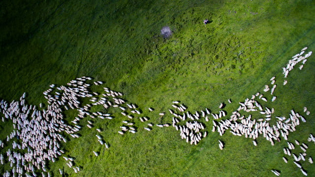 dronestagram 2016 contest 2nd prize winner category nature wildife swarm by szabolcs ignacz