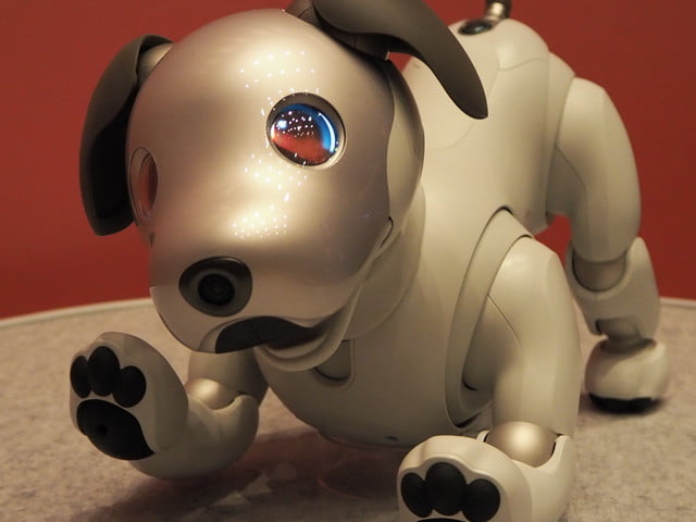 limited First Litter Edition Aibo