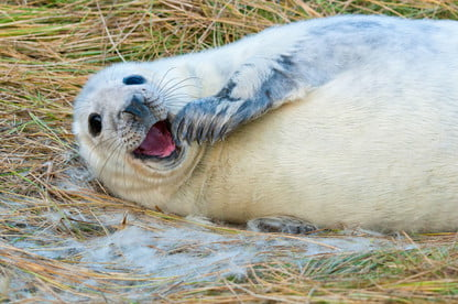 Don't take selfies with seals, wildlife officials warn
