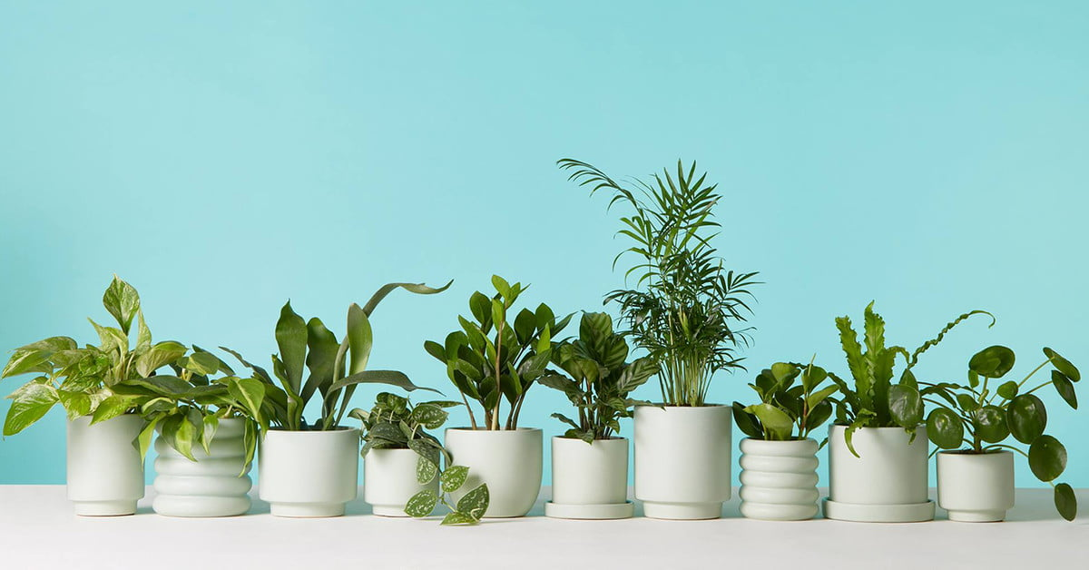 Where to Shop for the Best Indoor Plants That Will Ship Right to Your Door | Digital Trends