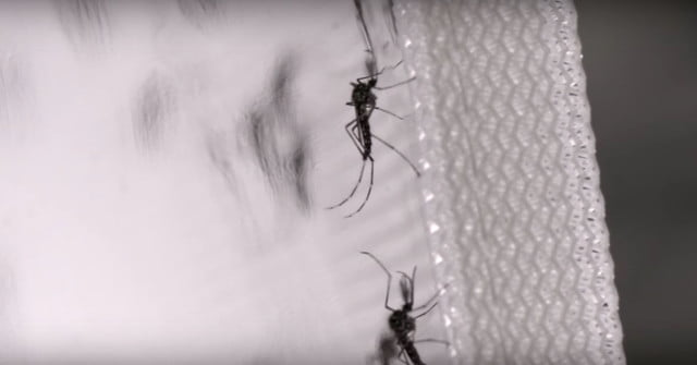 control mosquitos verily google insects2