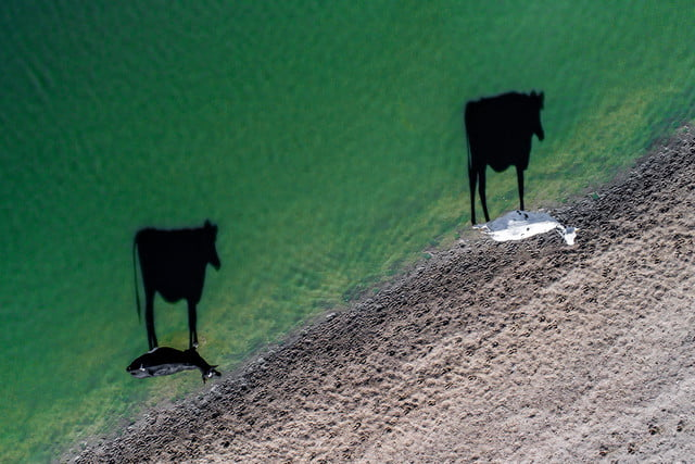dronestagram photography contest 2017 two moo by luke bell