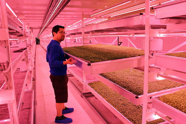 londons underground farm zero carbon food growing trays